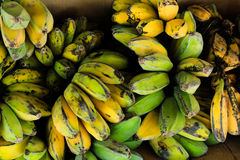 Saba香蕉 库存照片