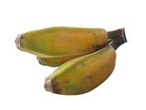 Saba banana fruit isolated. Saba banana fruits yellow isolated Royalty Free Stock Photo