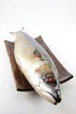Saba Fische Lizenzfreies Stockfoto