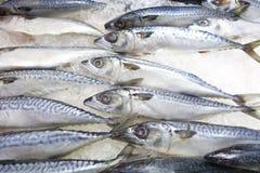 Saba-Fische auf Eis im Markt Stockfotografie