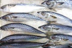 Saba-Fische auf Eis im Markt Stockfotos