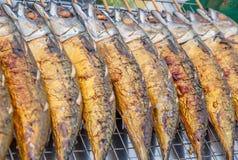 Saba fish Stock Images