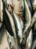 Saba fisk på is i marknad Arkivfoto