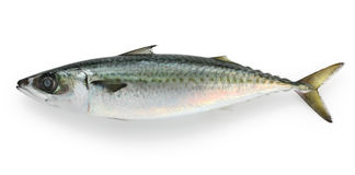Saba, japanese mackerel Royalty Free Stock Images