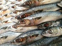 Saba mackerel fish Royalty Free Stock Photos