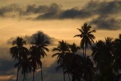 sabah solnedgång Arkivfoto