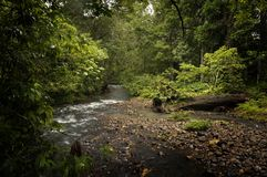 Sabah Wilderness Stock Images