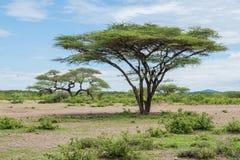 Sabana Foto de archivo libre de regalías