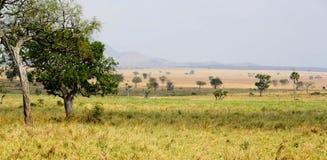 Sabana africana Imagenes de archivo