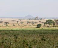 Sabana africana Fotografía de archivo libre de regalías