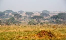 Sabana africana Fotos de archivo