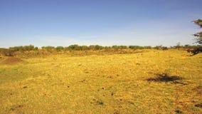 Sabana de la reserva nacional de Maasai Mara en África almacen de metraje de vídeo