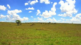 Sabana de la reserva nacional de Maasai Mara en África metrajes