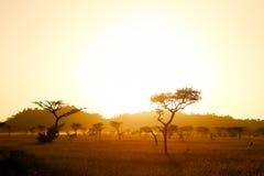 Sabana de Serengeti en luz de la mañana Fotos de archivo