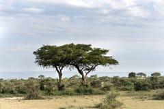 Sabana en el parque nacional Safari Reserve de las cataratas Murchison en Uganda - perla de África fotos de archivo