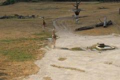 Sabana en el parque zoológico de Praga, República Checa Fotos de archivo libres de regalías