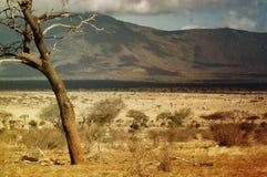 Sabana en Kenia Fotografía de archivo