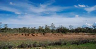 Sabana en Maasai Mara National Reserve Kenya Africa fotos de archivo libres de regalías