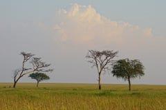 Sabana en Serengeti, Tanzania Imágenes de archivo libres de regalías