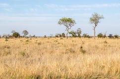 Sabana, parque nacional de Kruger Viñedo famoso de Kanonkop cerca de las montañas pintorescas en el resorte Imagen de archivo