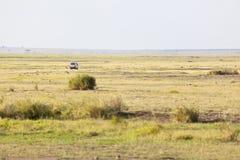 Sabana y Safari Car en Kenia Imagen de archivo