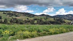 Sabanna et déboisement en Colombie Photos libres de droits