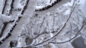 Sabanta zima Obrazy Stock