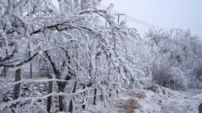 Sabanta zima Zdjęcie Stock