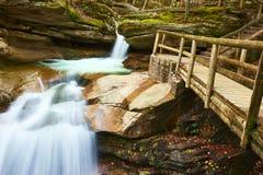 Sabbaday cai na floresta nacional da montanha branca Imagens de Stock