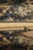Sabbia, acqua e legno Fotografia Stock Libera da Diritti