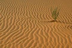 Sabbia & pianta Fotografia Stock Libera da Diritti