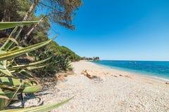 Sabbia bianca e mare blu in Santa Maria Navarrese fotografia stock