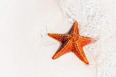 Sabbia bianca tropicale con le stelle marine rosse in chiara acqua Fotografie Stock