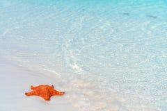Sabbia bianca tropicale con le stelle marine rosse in chiara acqua Immagini Stock Libere da Diritti