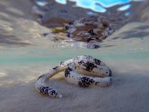 Sabbia che vaglia la stella di mare Fotografie Stock Libere da Diritti