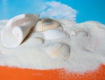 Sabbia con le coperture del mare Immagine Stock Libera da Diritti