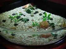 Sabbia dell'acquario Fotografie Stock