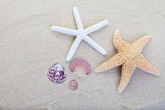 Sabbia della spiaggia Fotografie Stock