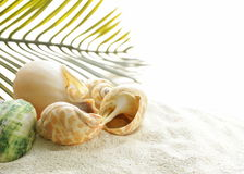 Sabbia della spiaggia e conchiglie, vacanza di concetto Fotografie Stock