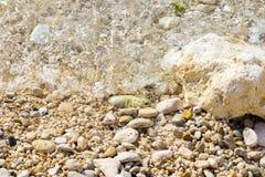 Sabbia di mare del fondo di estate con l'onda fotografia stock libera da diritti