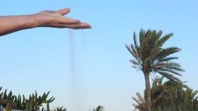 Sabbia di versamento della mano maschio tramite le dita in deserto sui cactus e sul fondo della palma archivi video