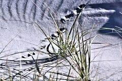 Sabbia Dune, canne, orme, mistero, strutture Fotografie Stock Libere da Diritti