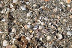 Sabbia e ciottoli sulla spiaggia immagine stock