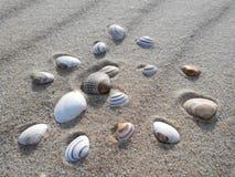 Sabbia e conchiglie, mare del Nord, Paesi Bassi immagini stock