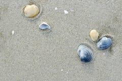Sabbia e conchiglie Stock Photos