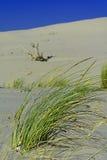 Sabbia e dune Fotografie Stock Libere da Diritti