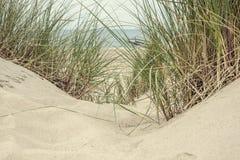 Sabbia ed erba nelle dune immagini stock