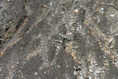 Sabbia grigia con alcune foglie 2 di giallo immagine stock libera da diritti