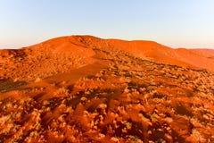 Sabbia Namibia marina di Namib Immagine Stock