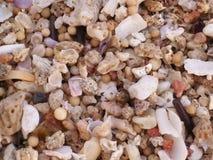 Sabbia reale di vita Immagine Stock Libera da Diritti
